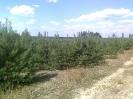 Сумське лісове господарство_1