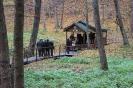 Сумське лісове господарство_49